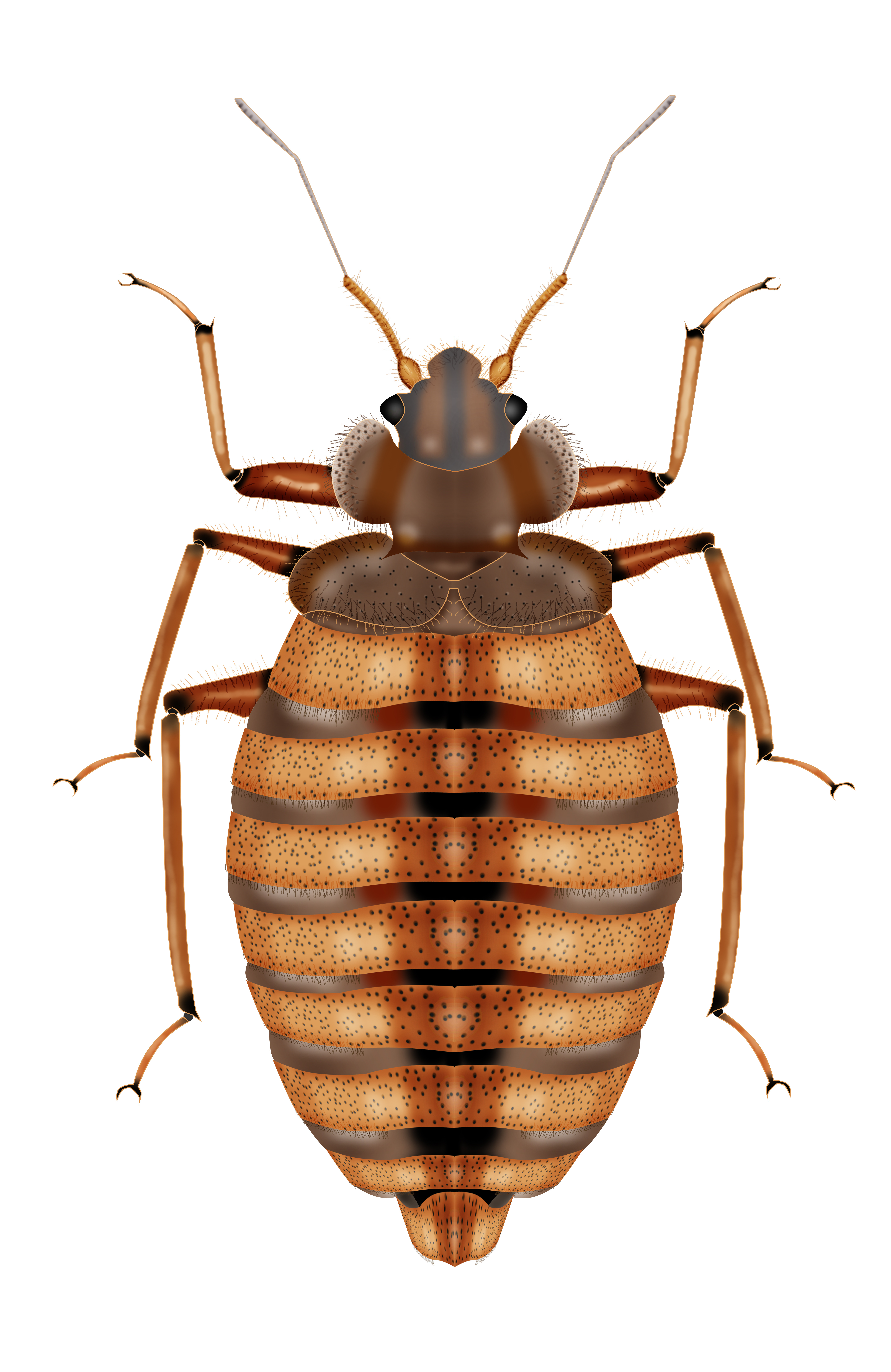 New California Bed Bug Disclosure Requirements Arroyo Property